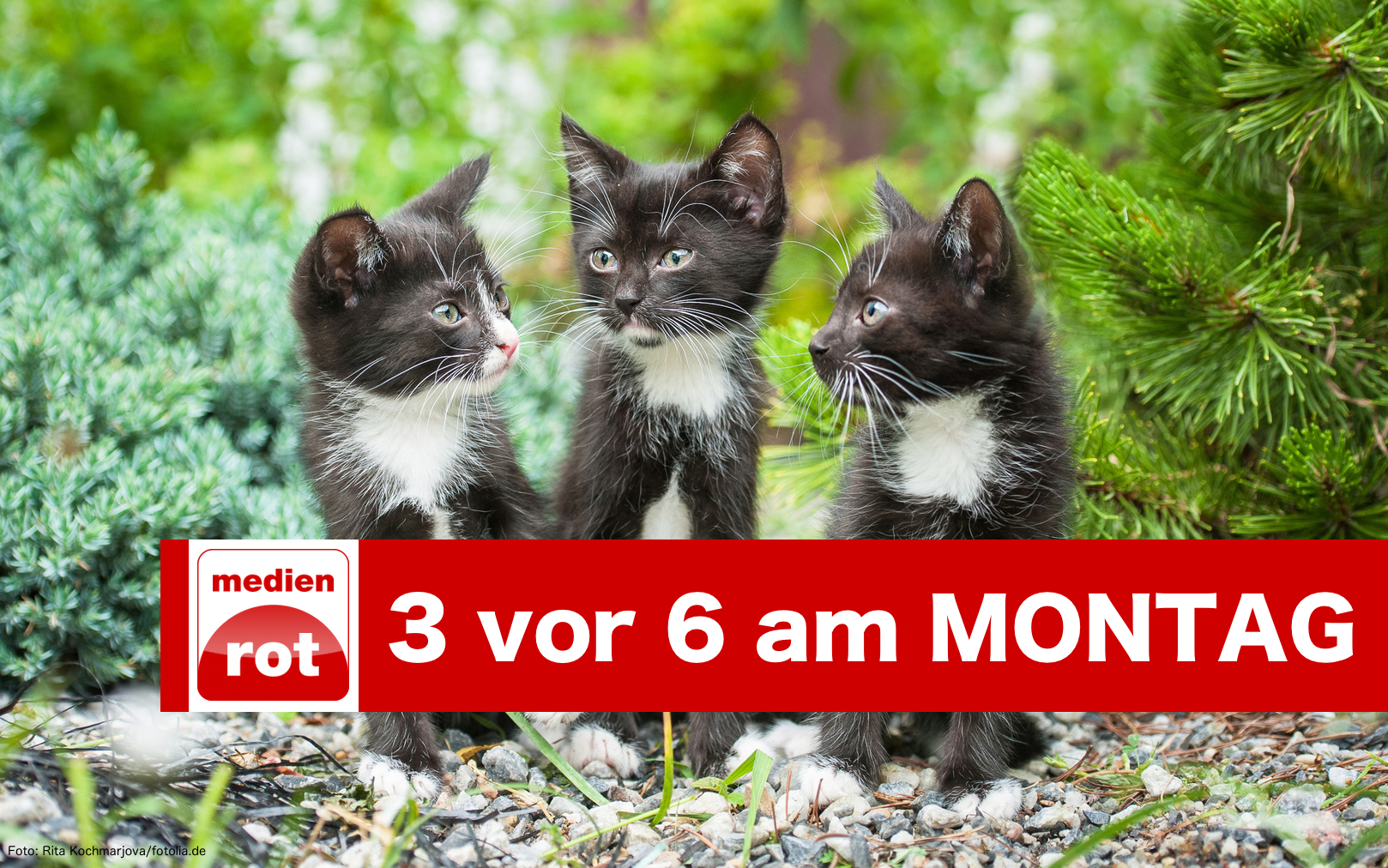 Three little black kittens sitting in the garden